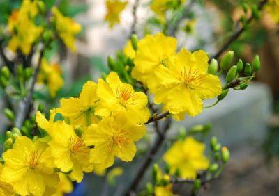 """Xem """"quẻ"""" đầu năm thông qua 12 loại hoa đặc trưng Đà Lạt"""
